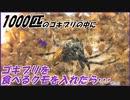 第38位:ゴキブリを食べるクモに1000匹のゴキブリを与えたら?~数の暴力が体感できる動画~