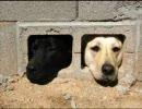 犬飼いの人にアンケート