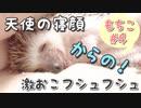 【ハリネズミ】天使の寝顔からの激おこフシュフシュ【もちこ#4】