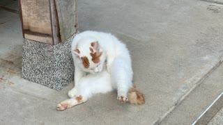 猫寺へぬこをモフりに行きました。