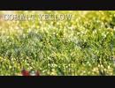 【睡眠用BGM】今晩からぐっすり眠れるラジオ 眠るナイト癒やしの音楽集「CobaltYellow」60分ver