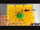 第67位:蟻を「迷路」に閉じ込めたら・・・、脱出できる?