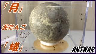 「月」みたいな泥だんごを蟻に与えたら、美しいジオラマが誕生した。