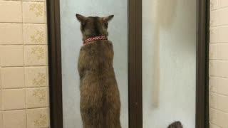 窓ふきする猫 ゴシゴシ(=^・^=)