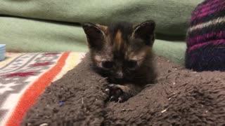 わちゃわちゃ子猫、猫ドームを占拠する