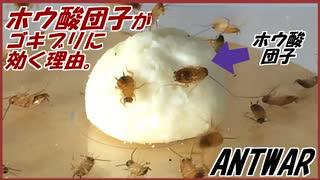 ホウ酸団子がゴキブリに何故効くのか、実際に確かめてみた。
