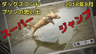 【思い出】ダックスフンド プリンのアルバム集(2018年8月)