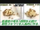 第53位:低濃度の毒エサを1週間ゴキブリに与え続けると、毒に耐性を持った「耐性ゴキブリ」になる?