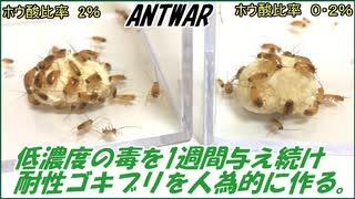 低濃度の毒エサを1週間ゴキブリに与え続けると、毒に耐性を持った「耐性ゴキブリ」になる?