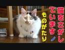 【シリーズ:猫を探していますの物語】2. 無事捕獲と二度目の試練