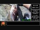 【リアル釣堀アタック】暇つぶしフィッシングPart8 海上釣堀田尻 RTA 01:11.43【真鯛チャート】
