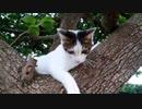【ぬこ】こねこねこねこ。またまた子猫が迷い込んできました・・・