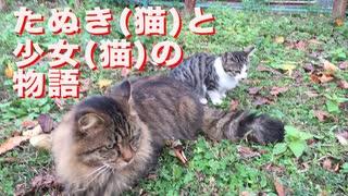 保護された貴族たぬき(猫)、共に過ごした少女(猫)との追憶