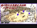 第39位:油断しているアリの群れの中にいきなり強敵ハサミムシを入れたら、アリはどうする?