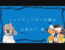 【ポケモンUSM】シュレディンガーの猫は元気か? 隷【ゆっくり・VOICEROID実況】