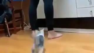 足を登る猫・・・・されたい?