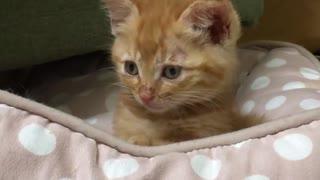 ジャンボ子猫、わちゃわちゃ子猫に社会の厳しさを教える