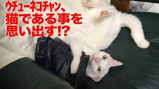ウチューネコチャン、猫のやり方をど忘れする