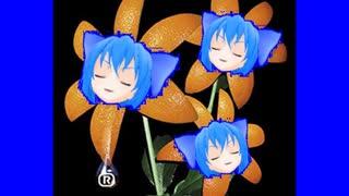 OMANCO MANCO / 花