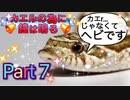 【実況】カエルの為に鐘は鳴るやろうぜ! その7ッ!