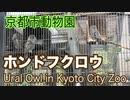 京都市動物園のホンドフクロウ