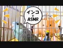 インコでASMR実験02