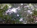 町中の林の中の音(9月中旬)
