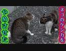 助っ人と二人で猫のケンカをとめた