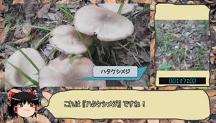 【RTA】きのこ狩り2019 ハタケシメジ編