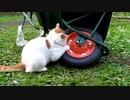 猫と一輪車を掛け合わせたらとんでもない結果に…www