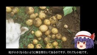 ゆっくり農民115ジャガイモ(春)を育てて