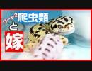 【鬼嫁!?】爬虫類嫌い!?の嫁に爬虫類お世話さてみたらすごかった!!【理解されない!!】