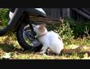 バイクにそんことしちゃ倒れちゃうよ…あ〜あwww