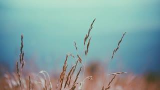 自然音 夏の終わり 田舎の朝