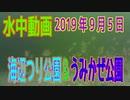 水中動画(2019年9月5日)in 横須賀海辺つり公園&うみかぜ公園