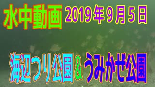 水中動画(2019年9月5日)in 横須賀海辺つ