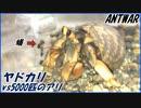 第3位:ヤドカリvs5000匹のケアリ ~開閉式のシェルター~