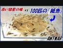 【赤い彗星】のアリvs100匹の俊足昆虫「紙魚」~ハプニング発生。囚われた女王アリ救出作戦!~