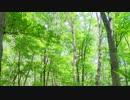 【Msyrfa】The Fairy Garden【オリジナル曲】demo