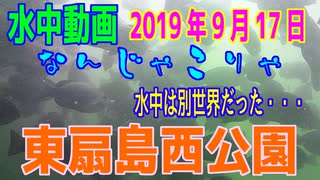 水中動画(2019年9月17日)in 東扇島西公園
