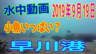水中動画(2019年9月20日)in 早川港