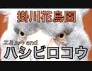 【掛川花鳥園】エミューとハシビロコウ ~Emu and Shoebill~