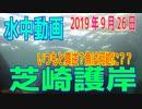 水中動画(2019年9月26日)in 芝崎護岸