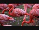 【Cover】Flamingo/米津玄師 歌ってみた by Kanon【歌ってみた】