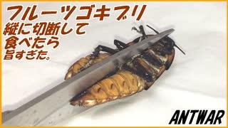 マダガスカルゴキブリを縦半分に切断して、アリに与えようとしたら卵がうますぎた!