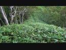 日本二百名山に登ってみた92-2/3 ペテガリ岳編