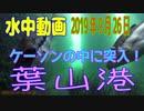 水中動画(2019年9月26日)in 葉山港