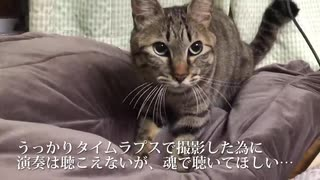 うどん職人猫、猫ピアニストに転職する