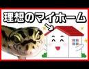 【5年経過】ヒョウモントカゲモドキ_レオパの飼い方、飼育環境の紹介。