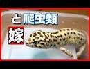 【鬼嫁!_】爬虫類嫌い!_の嫁に爬虫類の事を聞いてみたらすごかった!!【理解されない!!】